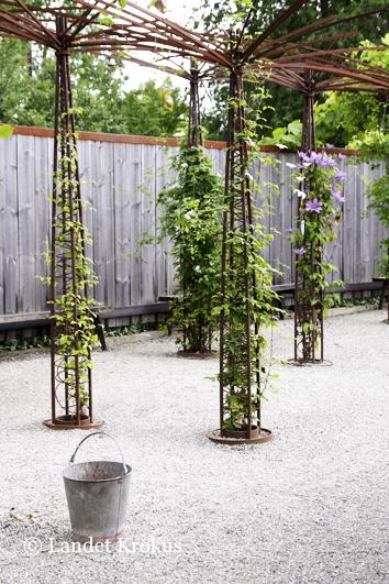Staket staket rosor : Landet Krokus: Rosträdgården på Wij Trädgårdar